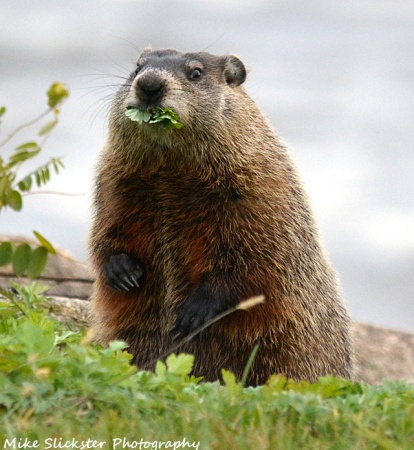 Groundhog-Pennypack03-s2